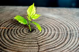 Workshop: Self integration, joy and Fulfillment, using Psychosynthesis with Ger Melia at Resurrexit . @ Resurrexit | County Kildare | Ireland